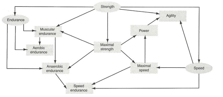 Biomotor Abilities